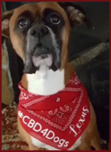 CBD Is Good For Our Pets